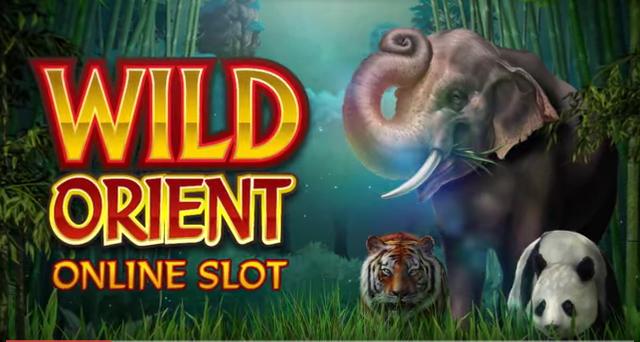 wild-orient-preview